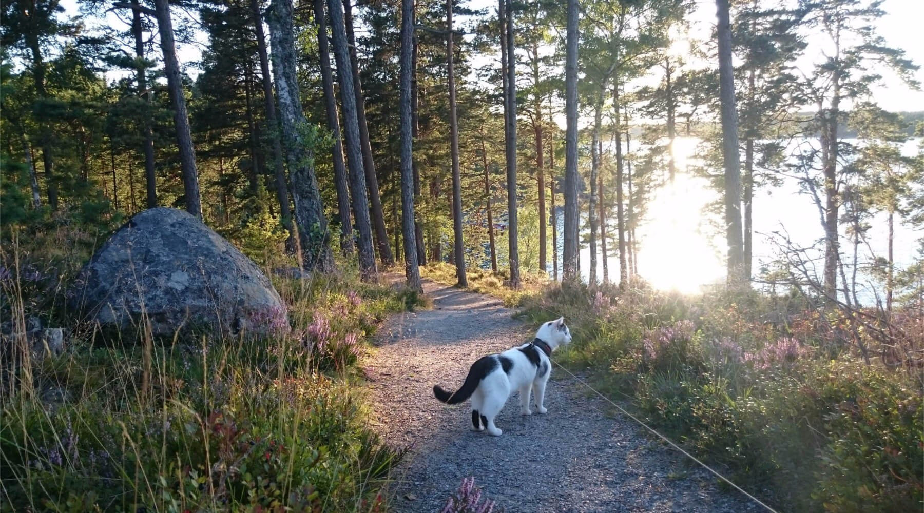 Camping With Cats: The Only Guide You Need!