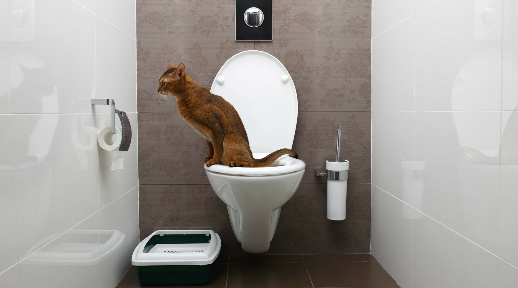 Proper litter box environment ends unwanted litter scatter: A study based on scientific research