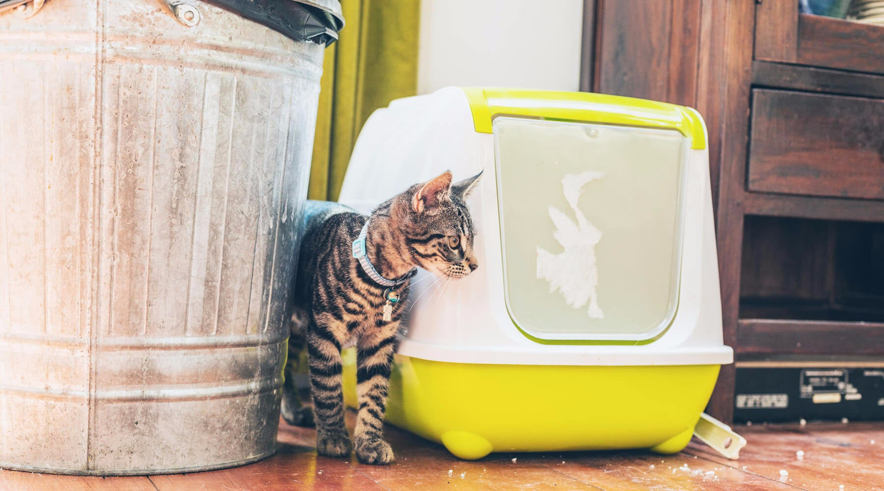 5 Simple Solutions to Prevent Scattered Litter in Your Home