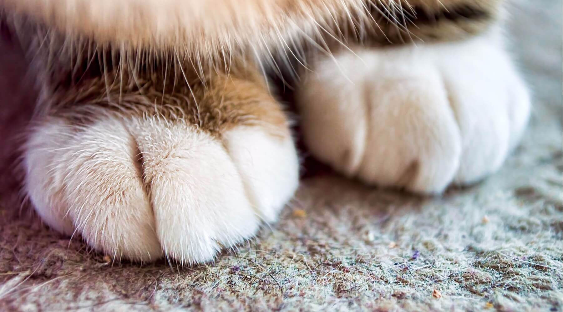Why Do Cats Knead? Common Reasons Behind This Feline