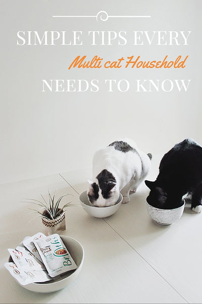 Multicat household