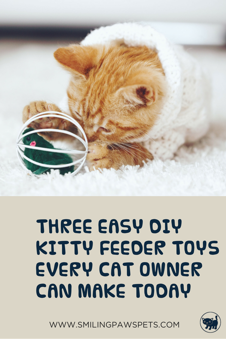 3 Simple DIY Cat Feeder Everyone Can Make Today