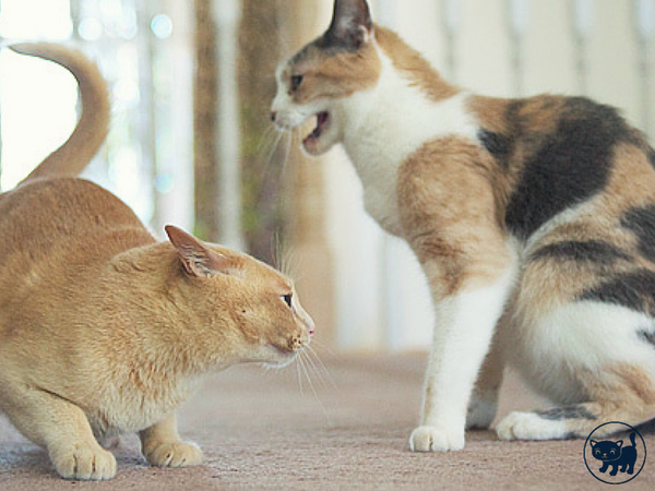 Understanding Why Your Cat Gets Aggressive
