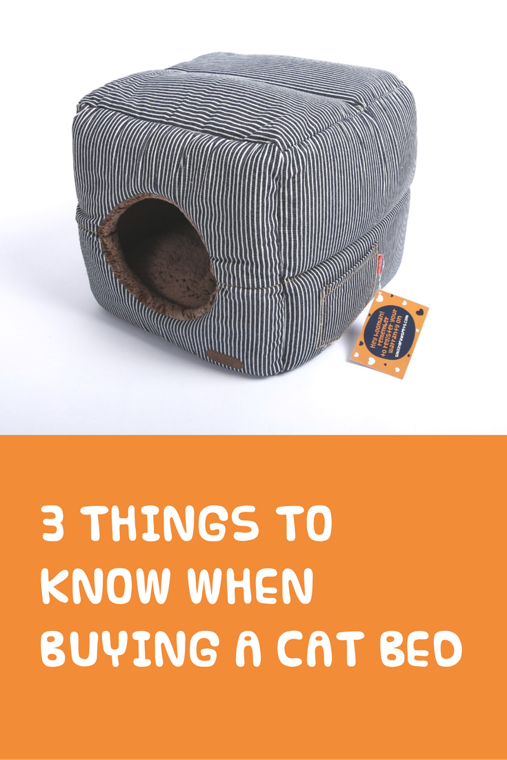 3 Things To Keep In Mind When Buying A Cat Bed