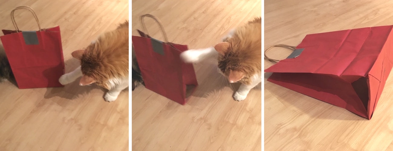 cat diy toy
