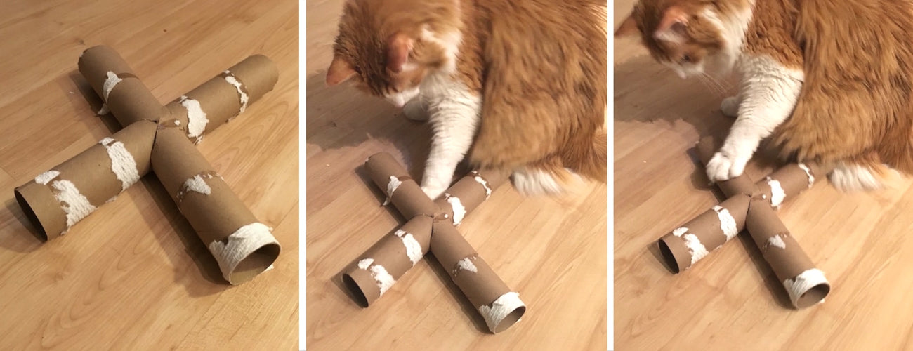 cat diy toy toiletpaper roll