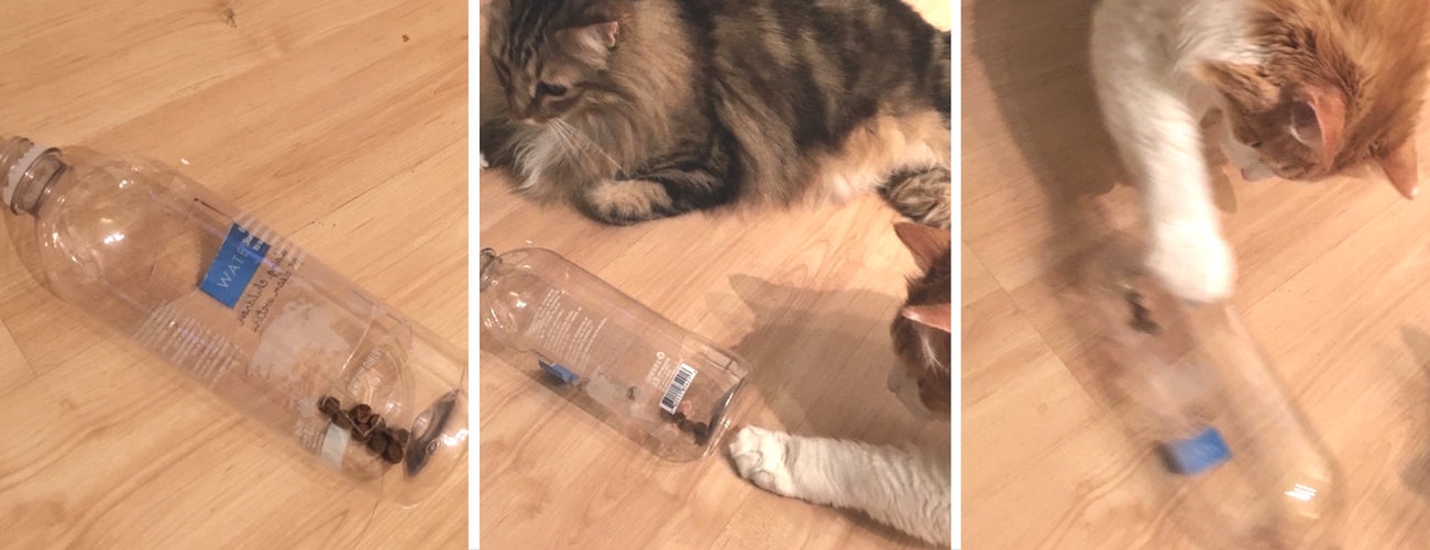 diy cat toy bottle