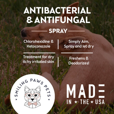 dog bacteria infection