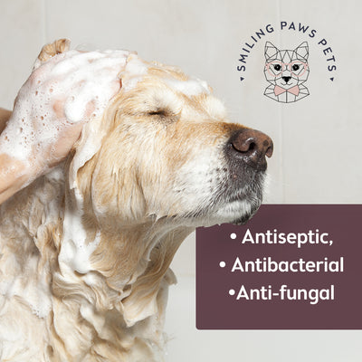 antifungal shampoo for dogs