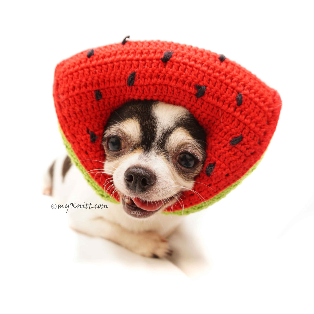 Watermelon Amigurumi Dog Toy Crochet, Watermelon Dog Hat Crochet DB11
