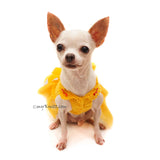 Chihuahua Clothes, Chihuahua Dress Wedding, Myknitt Designer Dog Clothes