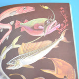Vintage Books - The Seashore & Under The Sea