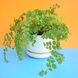 Vintage 1960s Plastic Plant Pot - Cream/ White