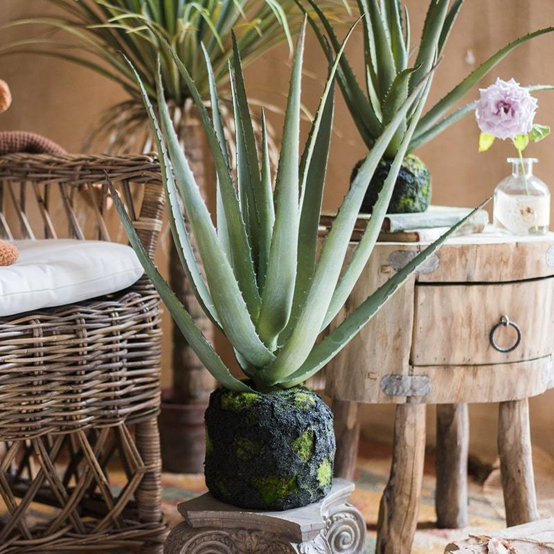 Artificial Aloe Vera on Faux Moss - G Home Collection