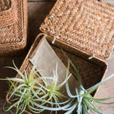 Rustic Natural Small Lidded Straw Basket in Brown (Set of 3) - G Home Collection