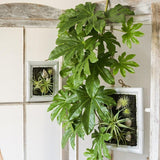 Rustic Artificial Fatsia Leaf Vines 32