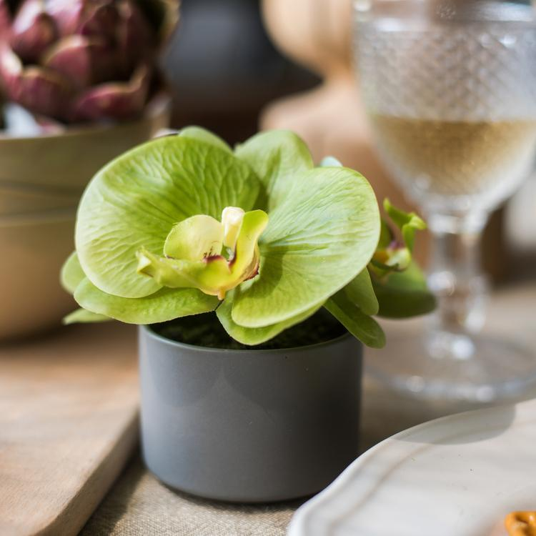 Rustic Mini Real Touch Potted Orchid in Green - G Home Collection