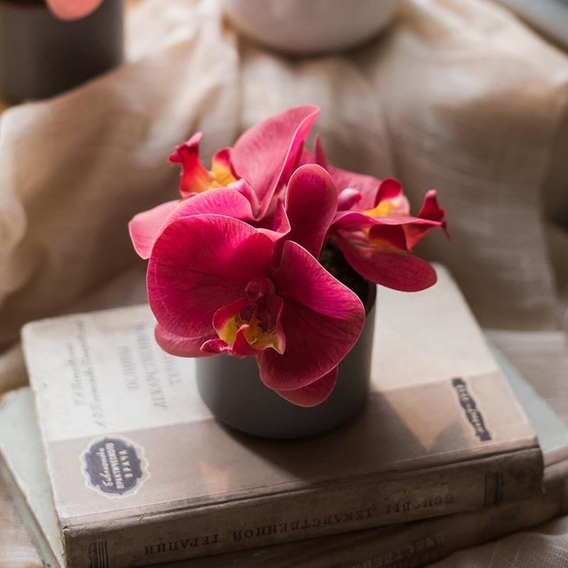 Rustic Mini Real Touch Potted Orchid in Velvet Red