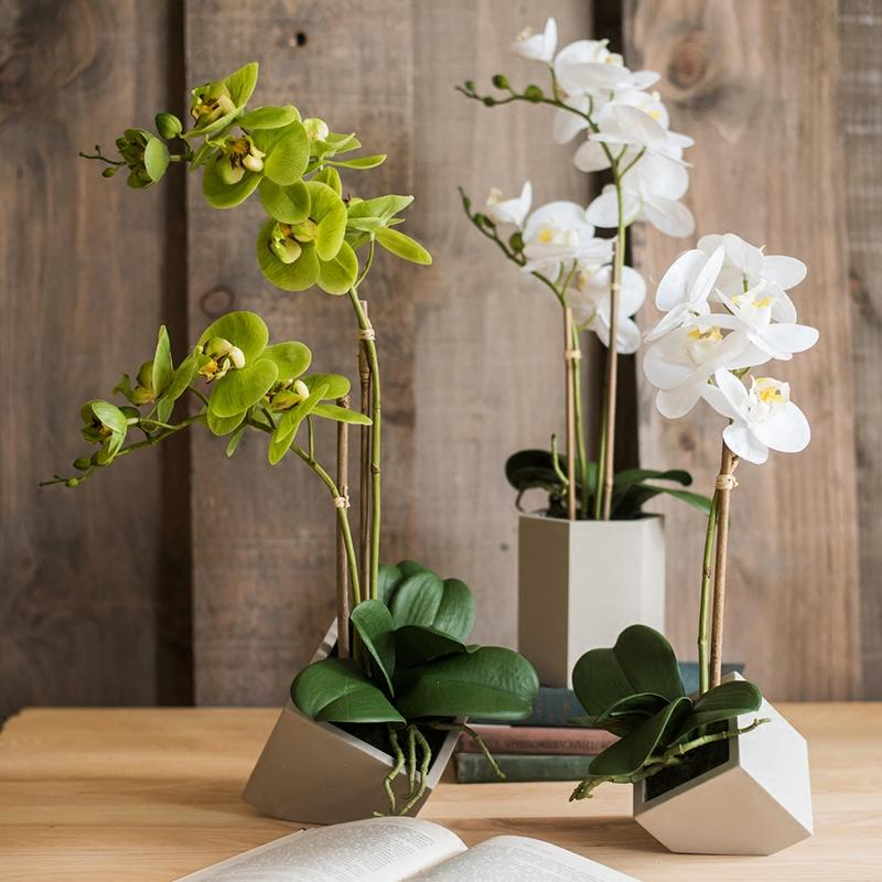 Real Touch Orchid Plant in Green and White - G Home Collection