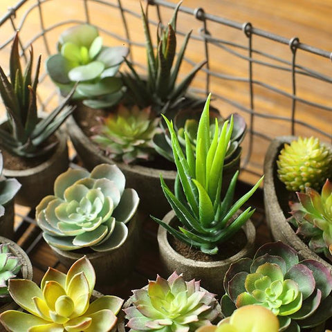 Rustic Artificial Small Succulent Planter Randomly Picked Set of 5