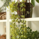 Rustic Artificial Small Green Leaf Vines 32