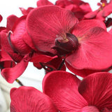 Silk Butterfly Orchid Stem in Red 37