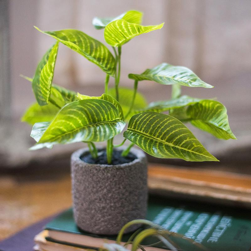 "Artificial Bonsai Sanchezia Leaf Potted Plant 10"" Tall - G Home Collection"