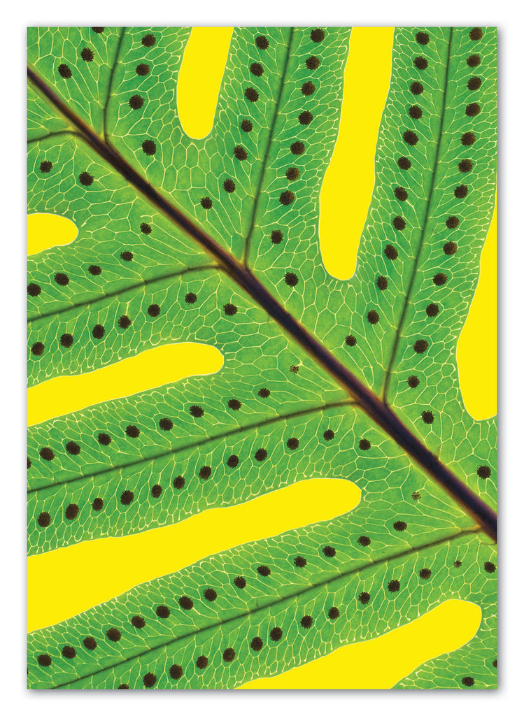 Macro Fern Greeting Card with Envelope