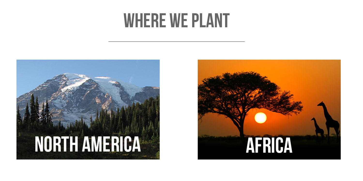 WHERE WE PLANT