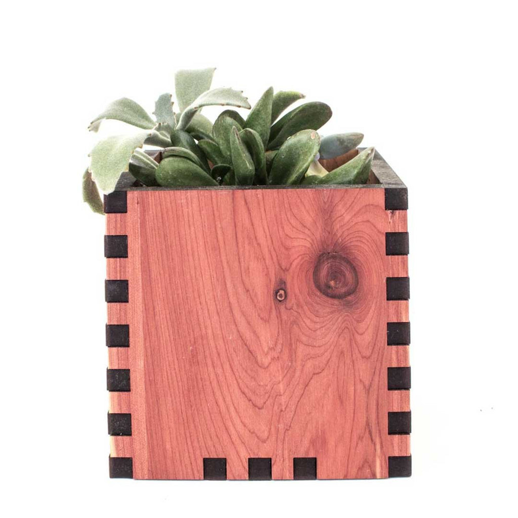 Square Desktop Planter - Woodchuck USA