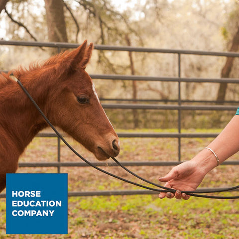 22' Foal Handling Line/ Soft Driving Lines