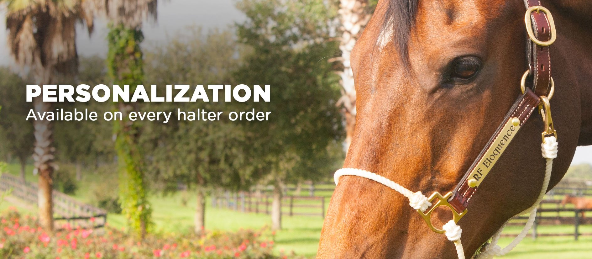 Designed For At-Home Horse Trainers Like You