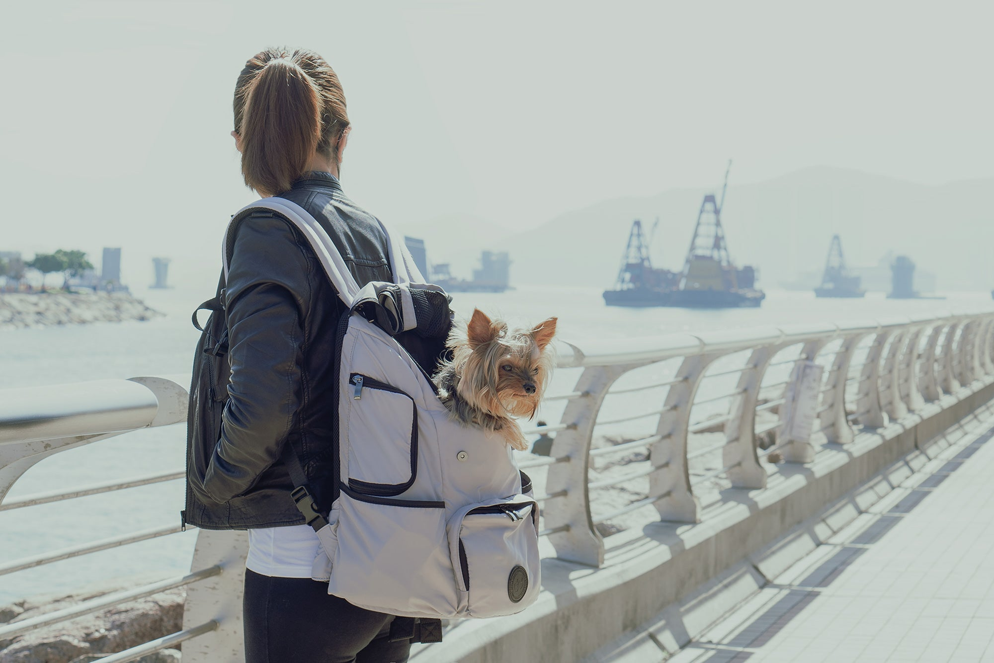 model carrying backpack pet carrier with her dog at the waterfront Promenade