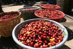 Coffee - Mexico Chiapas, Light - lb