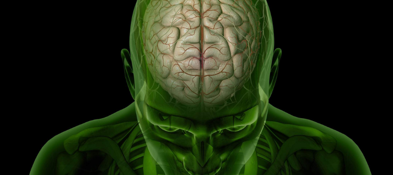 The Best Nootropics For Studying: How The Brain Works