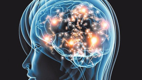5 Best Natural Nootropics to Replace Adderall - Primal One