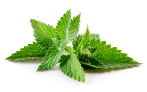 How Many Ways Can You Use Peppermint Oil