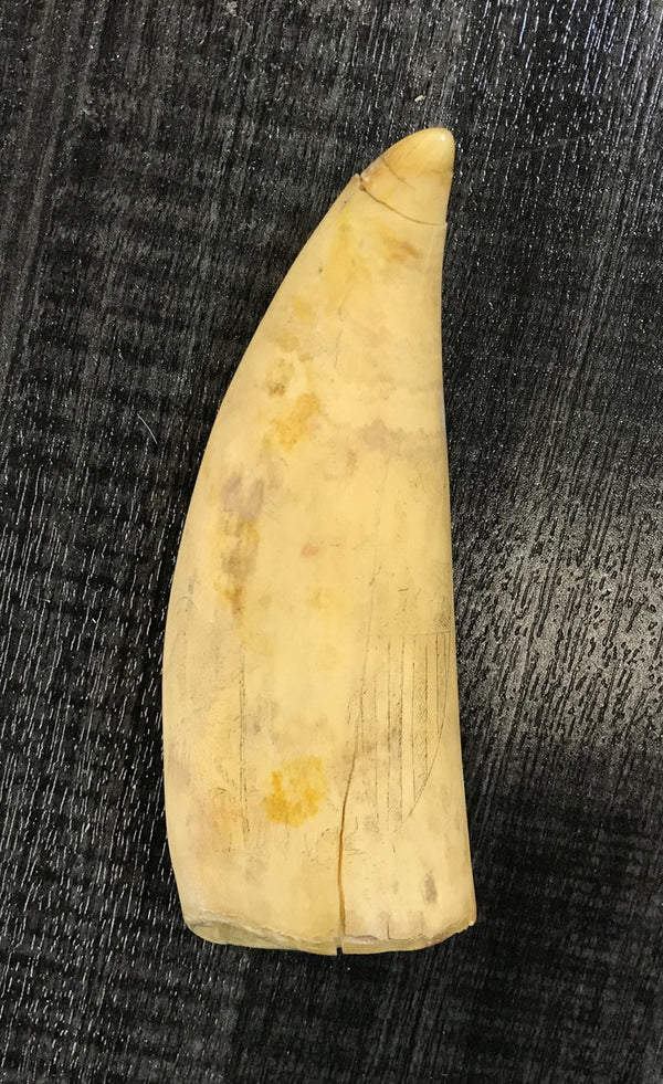 Scrimshaw Whale Tooth/Rare 1800s Engraving/Battle of Lake Champlain/APR $15k!!!^