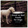Good vs. Bad Foods for Dogs