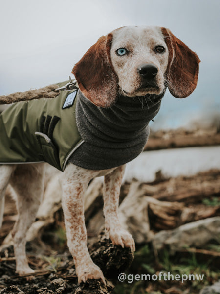 Voyagers K9 Apparel Beagle Winter Coat