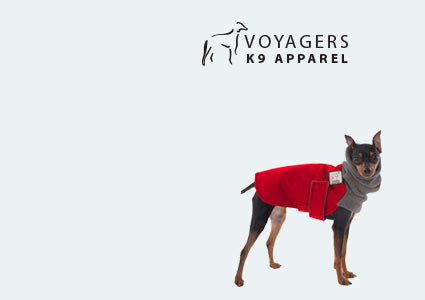 Miniature Pinscher Winter Coat