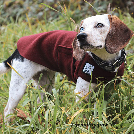 Choose your breed for quality dog coats. Voyagers K9 Apparel Beagle Tummy Warmer @gemofthepnw