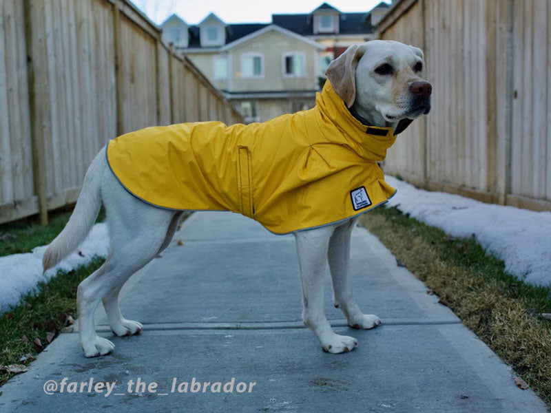 Voyagers K9 Apparel Custom Labrador Rain Coat