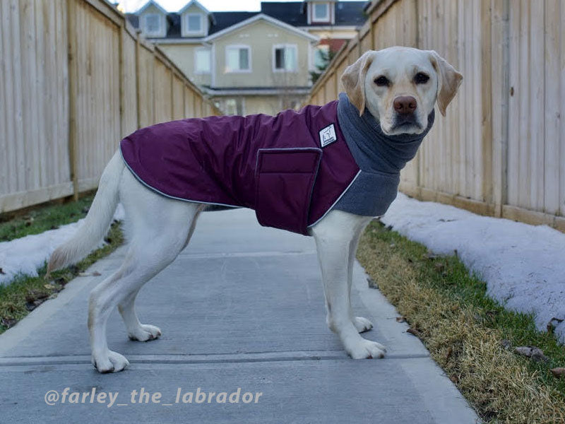 Voyagers K9 Apparel Custom Labrador Winter Coat
