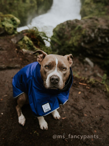 Voyagers K9 Apparel Custom Pittbull Rain Coat