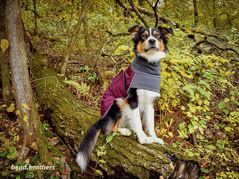 Voyagers K9 Apparel Custom Aussie Winter Coat