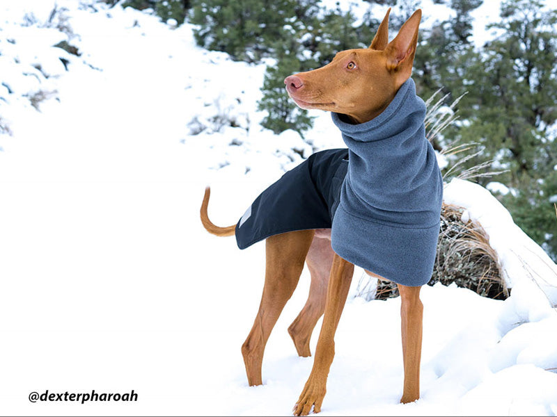 Voyagers K9 Apparel Custom Pharaoh Hound Winter Coat