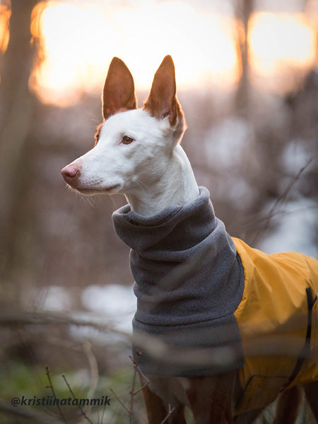 Voyagers K9 Apparel Custom Ibizan Hound Winter Coat