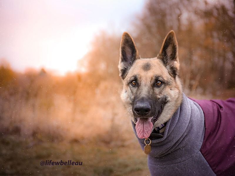 Voyagers K9 Apparel Custom German Shepherd Winter Coat