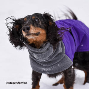 Dachshund shakes off snow in Voyagers K9 Apparel Winter Coat